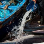 Oceana reveals illegal driftnet fishing in Morocco
