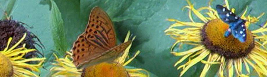 Europe 2020 biodiversity strategy