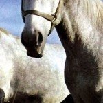 EU urged to stop importing horsemeat from non-EU countries