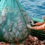 European Commission fails to propose an end to #Overfishing in #Baltic by 2020