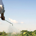 Pesticides: Experts endorse EU list of candidates for substitution