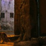 Animal rights: 'My Street Cats'