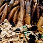 'Golden opportunity to end illegal #ivory trade wasted'