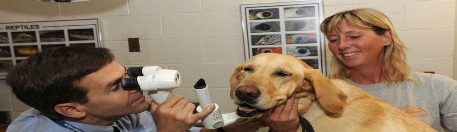 pet_veterinary