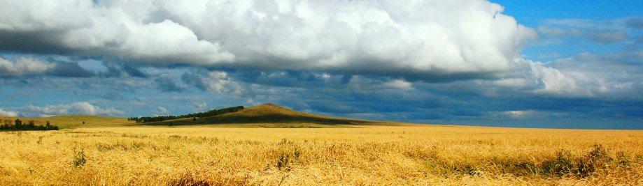 kazakhstan-wheat