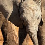 World agrees to end international trade in live, wild-caught #Elephants