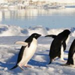 Commission welcomes first major Marine Protected Area in the Ross Sea as a landmark decision for #Antarctic