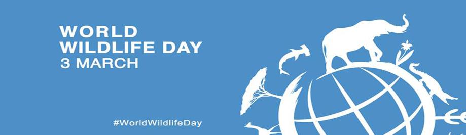 Thế giới động vật hoang dã-Day