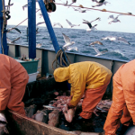 Commission proposes fishing opportunities in the #Atlantic and #NorthSea for 2020