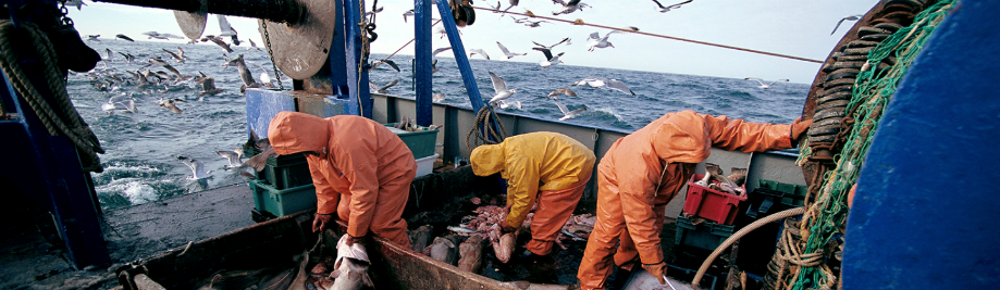 Maritime: Clear rules on prohibited fishing gear and more