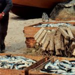 #Morocco – European Commission urged to press ahead with a new fishery agreement with Rabat