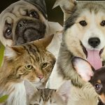 Conservative and Labour bid to attract dog and cat lovers