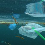 #Plastic in the ocean: The facts, effects and new EU rules
