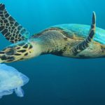 Parliament and Council agree drastic cuts to #PlasticPollution of environment