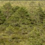 Commission steps up EU action to protect and restore world's #Forests