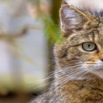 Animal welfare and protection: EU laws explained